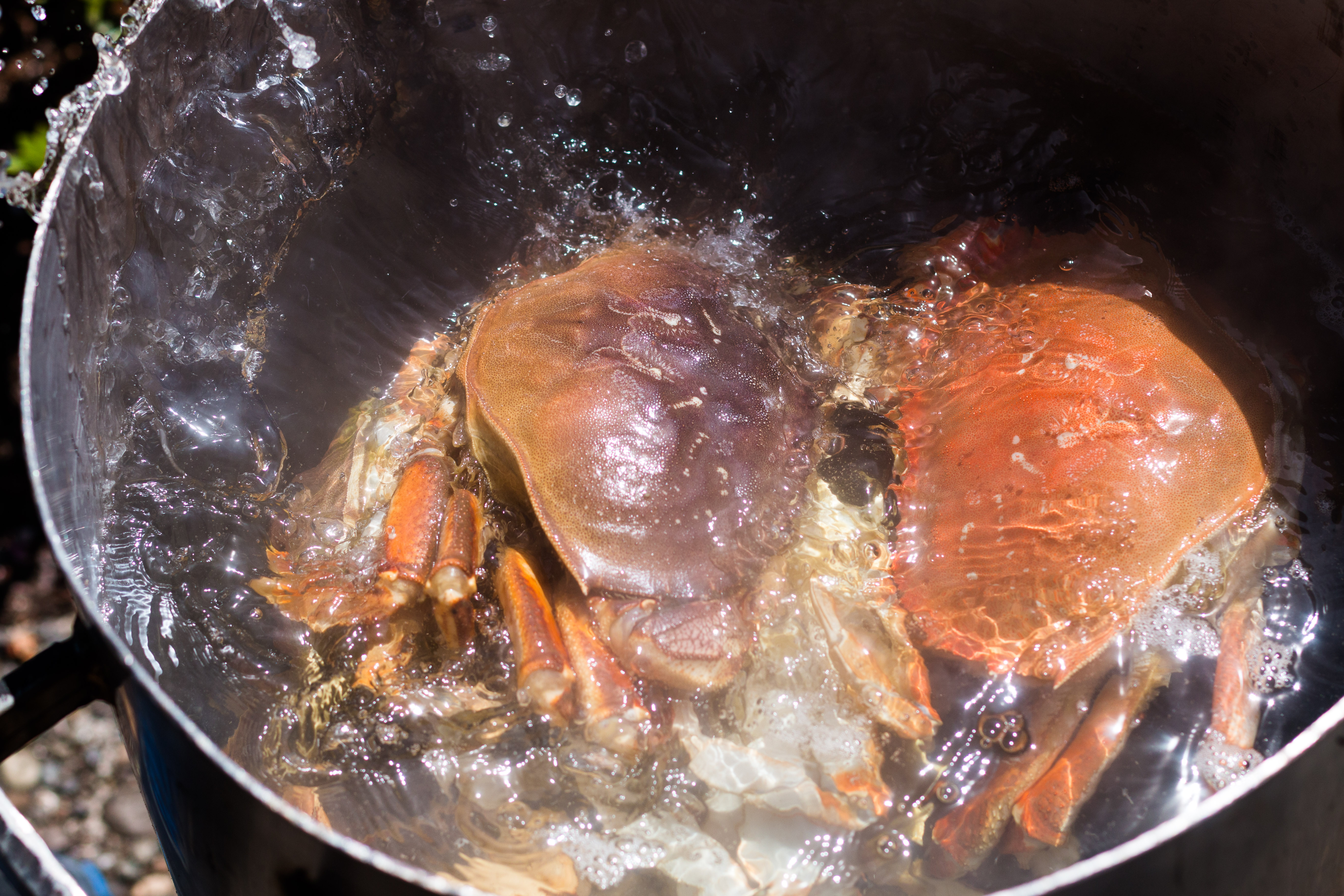 Learn how to prepare Dungeness crab + Video. | How to Cook | Seafood | Shellfish | Oregon | Fish & Wildlife | Ocean Life | www.megiswell.com