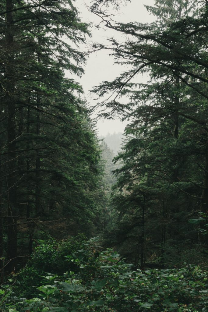Vertical shot of a dark and moody forest scene.